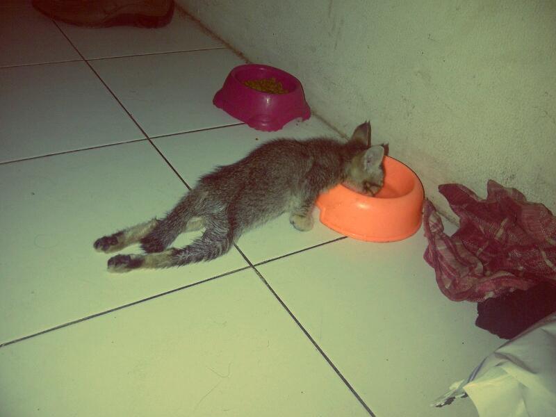 doniherdaru – Laman 4 – Kucing Budug 69977f03b4